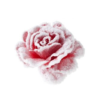Cosy @ Home Rose On Clip Pink With Snow D10cm